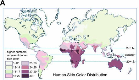 Out of Africa: What skin color tells us about ... Skin Color World Map Click on skin color change, skin color history, skin color colors, skin color art, skin mapping, solid color world map, eye color map, skin color genetics, skin color geography map, skin tone color codes, skin color numbers, skin tone world map, skin color green, skin color white, skin color markers, printable color world map, skin colors of the world, skin color globe, skin cancer world map,